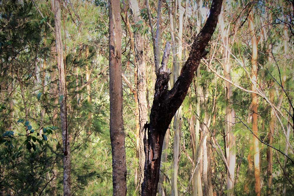 Tree change, Wollombi, Hunter Valley